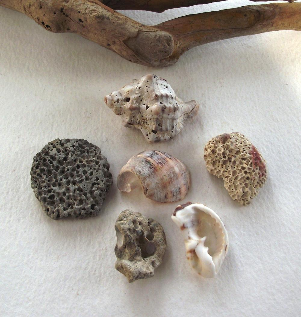 Spanish rocks and shells from the mediterranean sea.Natural beach rocks and sea shells by Oceangifts